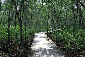Hutan Bakau Tanjung Pasir
