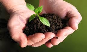 Mahasiswa UIN: Peduli Lingkungan dengan Sebar 1.000 Pohon