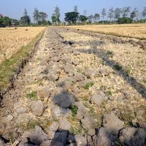 Petani Pandeglang Menjerit Sebab 45 Hektar Sawah Menjadi Kering