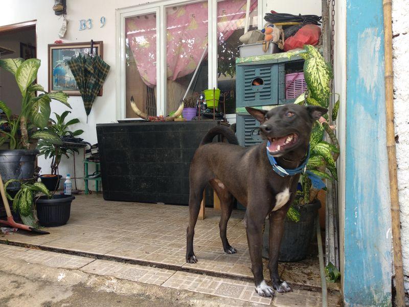 Kehidupan Wanita Bercadar Pemelihara 11 Ekor Anjing di Tangsel