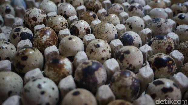 Harga Telur Ayam Melonjak hingga Rp 30.000/Kg di Karawang