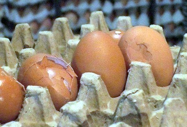 Bahaya Mengkonsumsi Telur Pecah