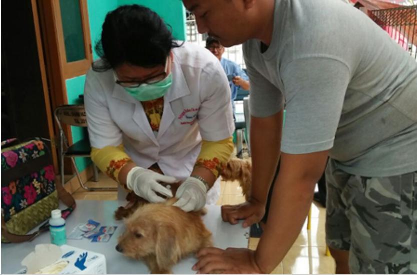 5.343 Hewan Penular Rabies di Jakarta Barat Telah Divaksin