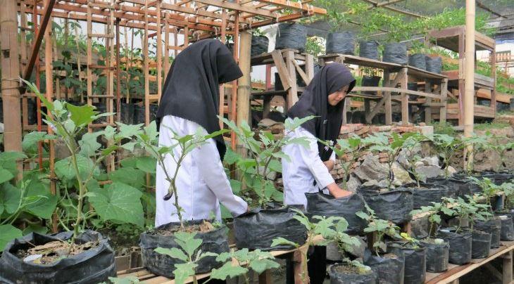 Pondok Pesantren di Serang Memproduksi Dodol Berbahan Baku Kangkung