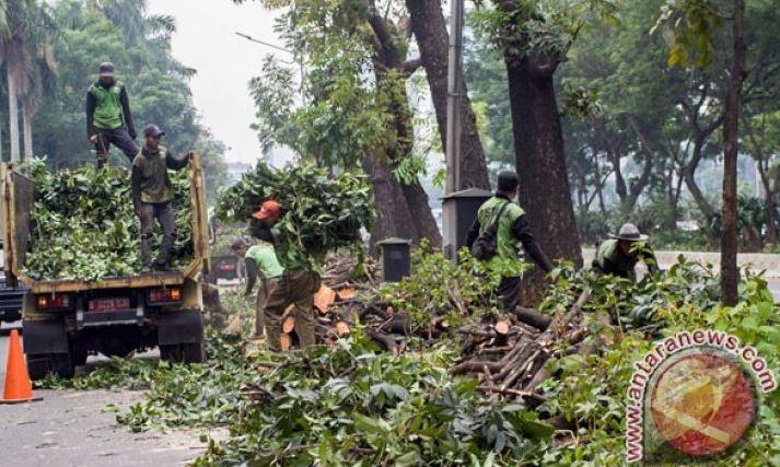 Suku Dinas Kehutanan Jaktim Intensifkan Pemangkasan Pohon Antisipasi Musim Hujan