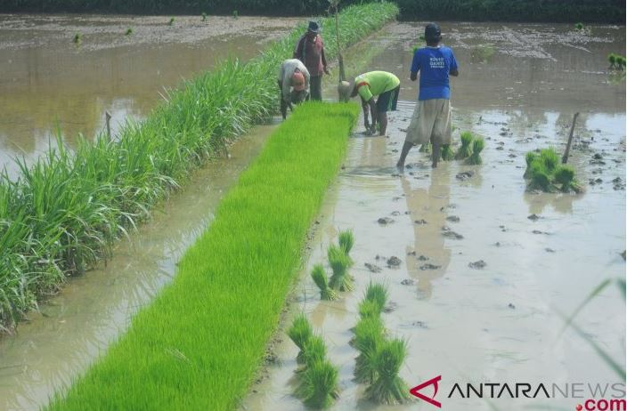 Prof Dedi: Pengelolaan Air Yang Efektif Kunci Sukses Pertanian Lahan Rawa