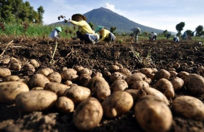 Mengenal Pakar Pertanian Muslim
