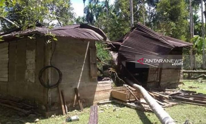 12 Gajah Ngamuk Merusak Rumah Di Nagan Raya Aceh