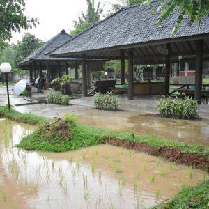 Rekomendasi Tempat Makan Seafood Enak di Tangsel