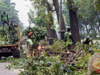 Sudin Kehutanan Jaktim Intensifkan Pemangkasan Pohon Antisipasi Musim Hujan