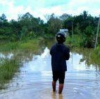 Banjir Kiriman Dari Kalimantan Timur Rendam Tiga Desa Di Tanjung Palas Timur