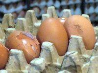 Dinkes Tangsel : Bahaya Mengkonsumsi Telur Pecah