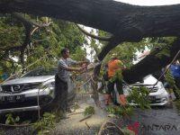 Pohon Tumbang Di Denpasar Menewaskan Warga
