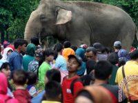 Taman Margasatwa Ragunan Dijaga 152 Polisi Dan TNI Saat Liburan Natal Dan Tahun Baru