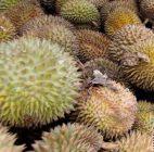 Dosen Riau Jadikan Biji Durian Jadi Tepung Tinggi Protein