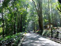 Pesona Keindahan Wisata Hutan Kota Jombang di Tangsel