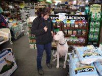 Rekomendasi Pet Shop Terlengkap di Tangsel