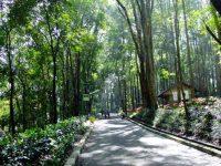 Rekomendasi Tempat Hunting Foto di Tangsel