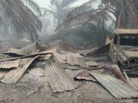 Kebakaran Lahan Sawit yang Menghanguskan 20 Rumah Warga