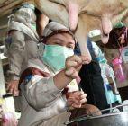 Asiknya Siswa SDIT Auliya Memerah Sapi di Sentul Fresh Bogor